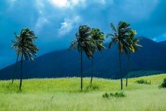 Vivid palms Royalty Free Stock Image