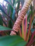 Vivid patterns on trees stock photos