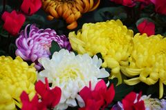 Vivid petals and flowers, natural background, garden beauty Royalty Free Stock Photography