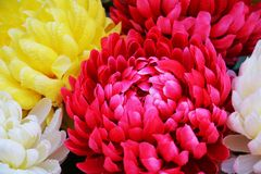Vivid pink violet yellow petals and flowers, natural background, garden beauty Stock Photography