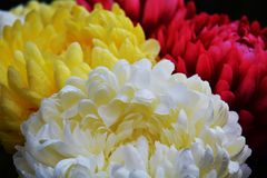 Vivid pink white violet yellow petals and flowers, natural background, garden beauty Stock Photography