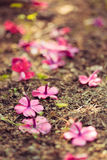 Vivid purple flowers on the ground Royalty Free Stock Images