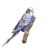 vivid realistic parrot sitting on tree branch. EPS Stock Images