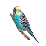 vivid realistic parrot sitting on tree branch. EPS Stock Image