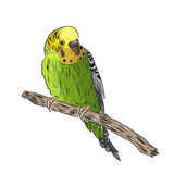vivid realistic parrot sitting on tree branch. EPS Royalty Free Stock Image