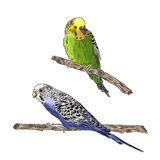vivid realistic parrot sitting on tree branch. EPS Royalty Free Stock Photos