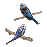 vivid realistic parrot sitting on tree branch. EPS Royalty Free Stock Images
