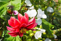 Vivid red flower on green background Stock Image