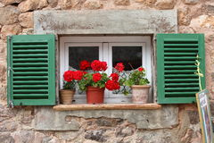 Vivid red geraniums on a windowsill Royalty Free Stock Image