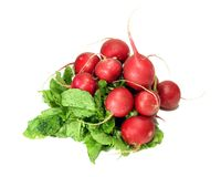 Vivid Red radishes. Red radishes and greens isolated over white royalty free stock photos