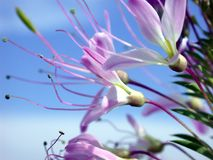 Vivid Snips. Highly saturated, delicate flowers Royalty Free Stock Image