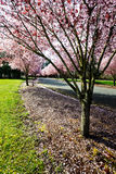Vivid spring light on flowering trees Stock Photo