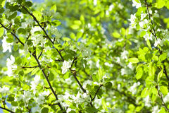Vivid spring tree leafs. Bright stock photography