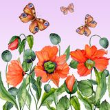 Vivid summer background. Beautiful red poppy flowers and flying butterflies on pink background. Square shape. Seamless floral pattern. Watercolor painting Royalty Free Stock Image