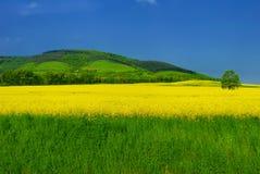 Vivid summer landscape. Blue-green-yellow vivid summer landscape Stock Photos