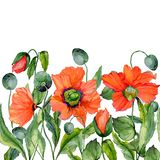 Vivid summer or spring background. Beautiful red poppy flowers on white background. Square shape. Seamless floral pattern. Watercolor painting. Hand painted stock illustration