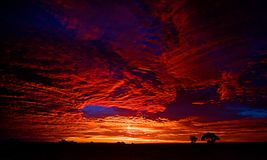 Vivid sunrise at Lightening Ridge. A vivid sunrise at Lightening Ridge in New South Wales. Two trees are silhouetted against the sunrise Royalty Free Stock Image