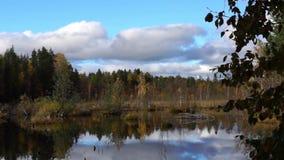 Vivid swamp still. Vivid swamp in wild taiga of Karelia in autumn stock video footage