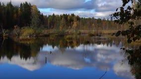 Vivid swamp in wild taiga tilt up stock video