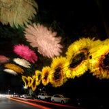 Vivid Sydney. Light installation during the Sydney Vivid Festival Royalty Free Stock Image