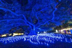 Vivid Sydney 2016 light festival illumination of eucalyptus tree Stock Photo