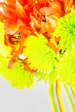 Vivid ttulip and daisy bouquet Stock Images