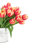 Vivid Tulip Beauty Stock Images