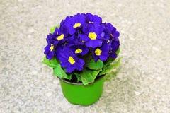 Vivid violet flowers Stock Photos