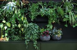 A vivid wall full of green house plants royalty free stock photo