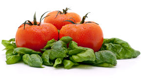 Vivid wet ripe tomatoes. And basil leaves Royalty Free Stock Images