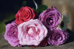 Vividly colored roses bouquet positioned on a tree trunk under strong sunlight. Horizontal shot of bridal bouquet with rose, purple and pink roses. Wedding Stock Photos