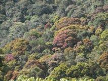 Vividly färgade träd Arkivfoto