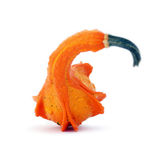 Vividly orange unusually shaped autumn squash Royalty Free Stock Image
