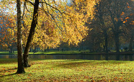 Vizille park in autumn. The autumn photo of golden trees in Vizille park near Grenoble, France Stock Photography