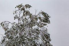 Vizinhança sob o cerco: Primeira neve de uma estação de 2018 invernos em Omaha Nebraska EUA fotografia de stock