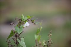 vjun rasfokusirovannom绿色背景的植物 免版税库存照片