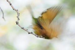 Vlaag van vleugels royalty-vrije stock afbeeldingen