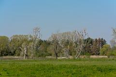 Vlaams de lentelandschap met weiden in het moeras en de dode bomen stock afbeeldingen