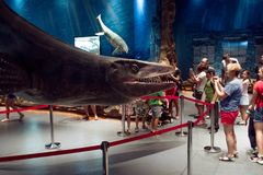 VLADIVOSTOK, RUSSIA - AUGUST 18, 2018: Prehistoric underwater reptiles. Exposition in oceanarium royalty free stock photo