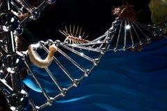 VLADIVOSTOK RYSSLAND - AUGUSTI 18, 2018: DNA och trilobites, begrepp av evolution av liv arkivbild