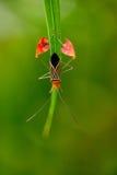 Vlag Betaald Insect Stock Afbeeldingen
