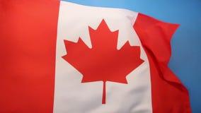Vlag van Canada stock footage