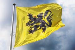 Vlag van Vlaanderen stock foto's