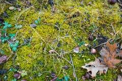 Vlak leg achtergrondtextuurmengeling van heldergroen mos die zwarte grond, sommige groene klaverinstallaties, de herfstgebied beh royalty-vrije stock afbeeldingen