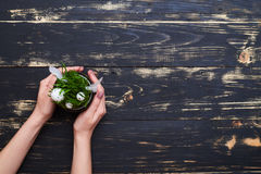 Vlak leg beeld van bloempot met groen gras en eieren op grung Stock Afbeeldingen
