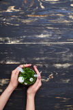 Vlak leg beeld, vrouwenhanden die pot met vers groen gras houden Stock Foto