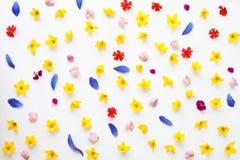 Vlak leg botanische achtergrond met bloemen: lupine, kamille Stock Fotografie