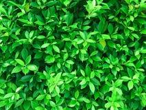 Vlak leg, de Creatieve tropische groene lay-out van het bladerenpatroon, Aard Royalty-vrije Stock Foto
