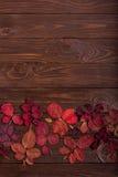Vlak leg kader van de herfst karmozijnrode bladeren op een donkere houten backgro Royalty-vrije Stock Foto's