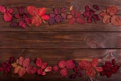 Vlak leg kader van de herfst karmozijnrode bladeren op een donkere houten backgro Stock Afbeeldingen